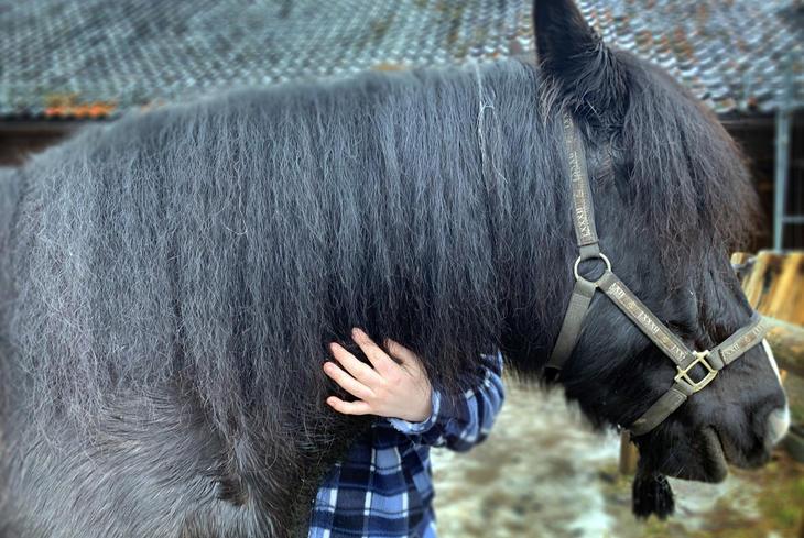 For Kristian er den fysiske kontakten med hesten Snippen ukas høydepunkt på Gaustad.
